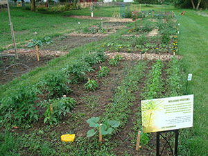 The newly tilled and planted community garden in Cross Plains' Zander Park.
